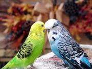 Попугаи разные продаю
