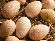 Продам інкубаційне качине яйце