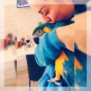 Попугай Ара+ Вольер